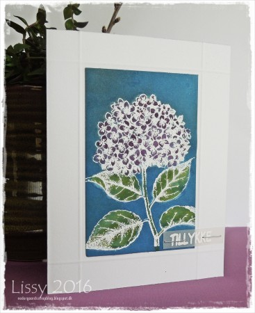 hortensia blå..hb